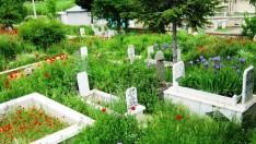 Okuduğumuz Duaları Ölmüşlere Bağışlasak Hepsine Aynı Sevap Gider mi?