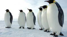 Kutuplarda Namaz ve Oruç İbadetleri Nasıl Yapılır?